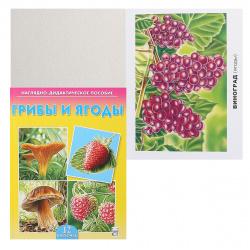 Развивающие карточки 12шт Рыжий кот Грибы и ягоды ПД-7215