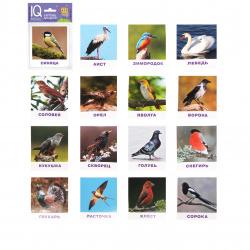Развивающие карточки 17шт Айрис-пресс Умный малыш Птицы 80*90мм 25983