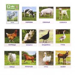 Развивающие карточки 13шт Айрис-пресс Умный малыш Домашние животные 80*90мм 26011